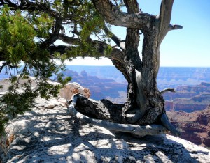 North Rim, Grand Canyon, AZ